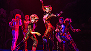 Kim Faure as Demeter, Christine Cornish Smith as Bombalurina and cast in Cats